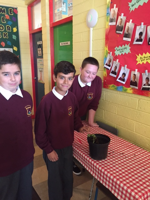 6th Class planting a class tree for Tree Week